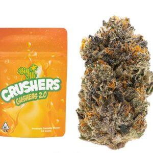 Buy Crushers Gushers Strain by Big Al's Exotics