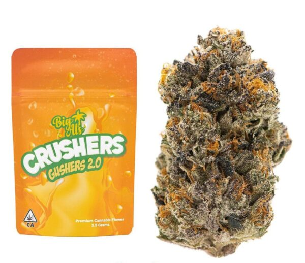 Buy Crushers Gushers Strain by Big Al's Exotics
