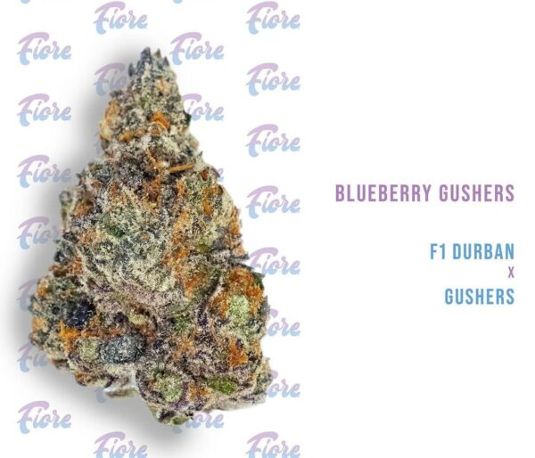 Buy Blueberry Gushers Strain by Fiore Online
