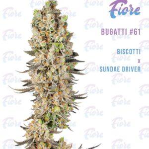 Buy Bugatti #61 Strain by Fiore Online