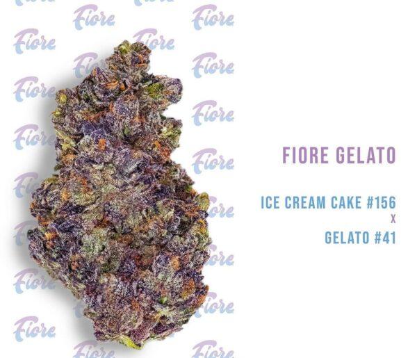Buy Gelato Strain by Fiore Online