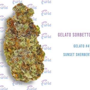 Buy Gelato Sorbetto Strain by Fiore Online