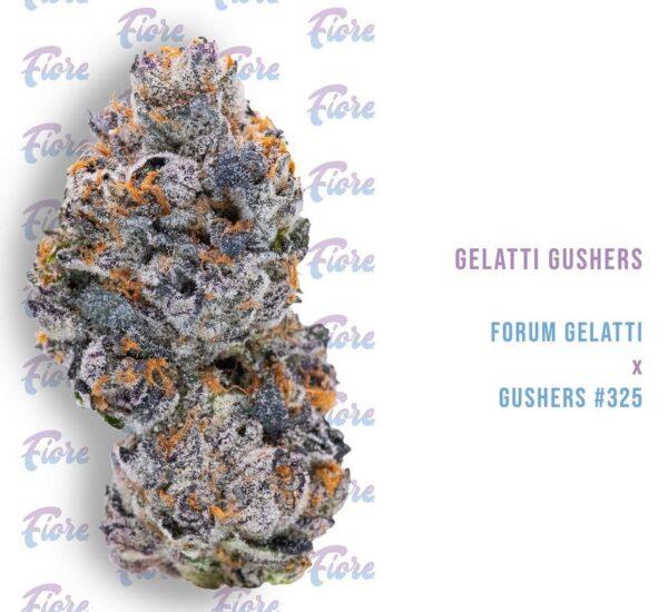 Buy Gelatti Gushers Strain by Fiore Online