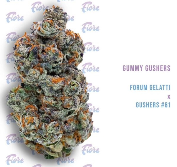 Buy Gummy Gushers Strain by Fiore Online