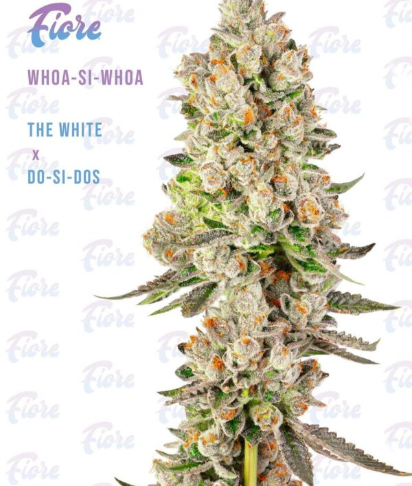 Buy Whoa-Si-Whoa Strain by Fiore Online